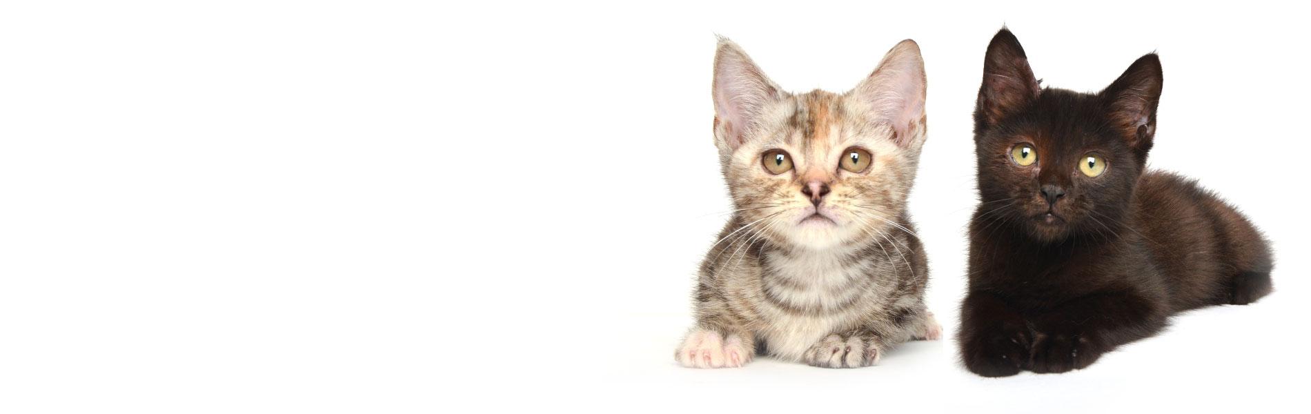 かわいい子猫のペットショップ