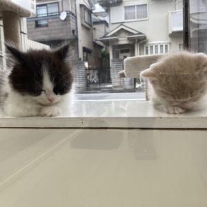 2頭の居眠り子猫