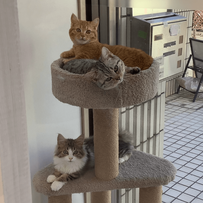 グループ飼育