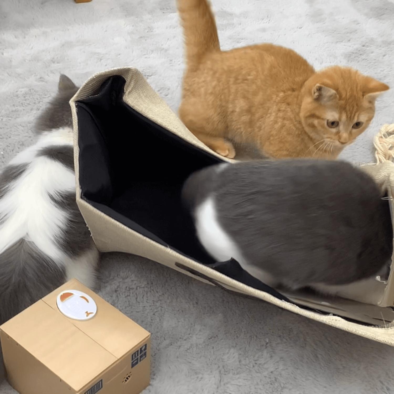 子猫同士の遊びの時間